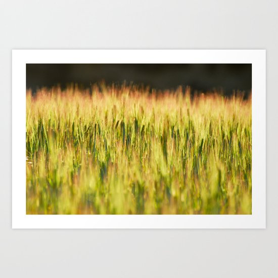 Spring fields Art Print