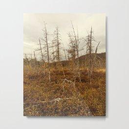 tree in the bog Metal Print