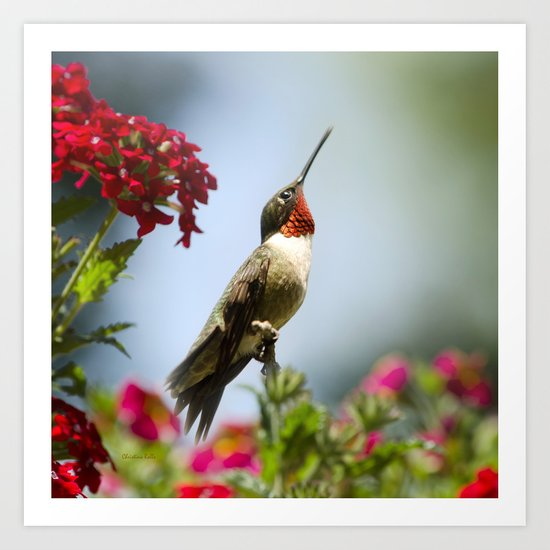 Hummingbird Guardian Art Print