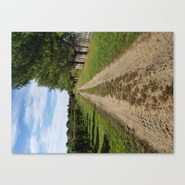 On the way to home, Winery landscape Canvas Print