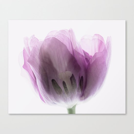 Inside Out Tulip Canvas Print