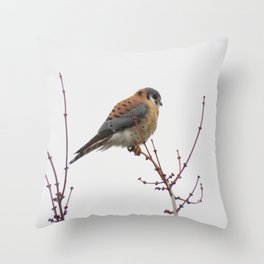 Kestrel (Sparrowhawk) Perched 12 Throw Pillow