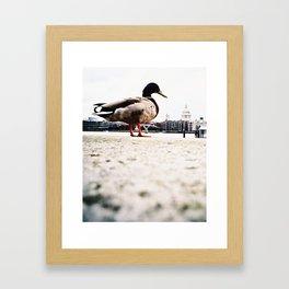 duckzilla Framed Art Print