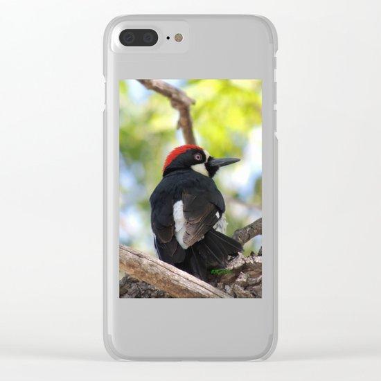 Acorn Woodpecker in Malibu Clear iPhone Case