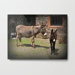 Clovelly Donkeys Metal Print