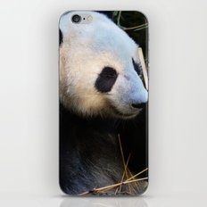 Panda Nap iPhone & iPod Skin