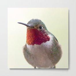 Watercolor Bird, Broad-Tailed Hummingbird 02, Estes Park, Colorado, Rocky Mountain Splendor Metal Print