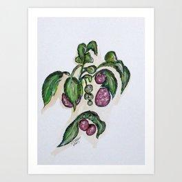 Hanging Raspberries Art Print