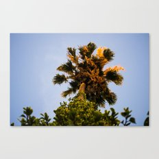 Upward View Canvas Print