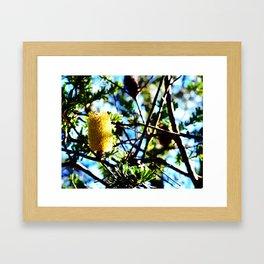 Yellow Bottlebrush Framed Art Print