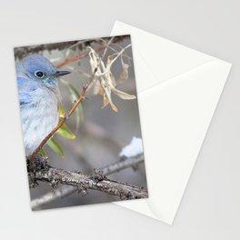 Watercolor Bird, Mountain Bluebird 09, Estes Park, Colorado, Winter Plumage Stationery Cards