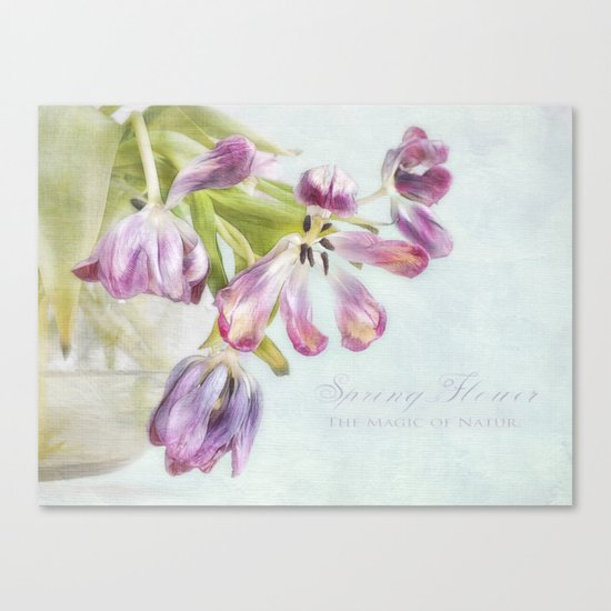 love tulips Canvas Print
