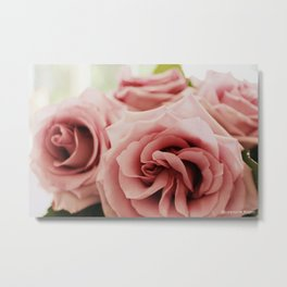 Sterling Roses, No. 1 Metal Print