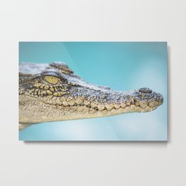 Saltwater Crocodile Metal Print