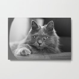 Fluffy Grey Cat Metal Print