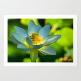 Green Lotus Flower Art Print