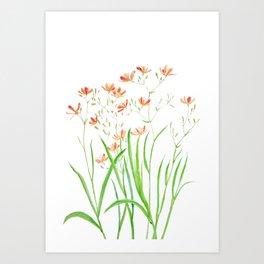 blackberry lily Art Print