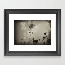 """Queen Anne's Lace """"black and white"""" Framed Art Print"""