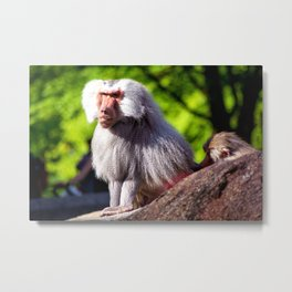 The Boss from Hellabrunn - Munich Metal Print
