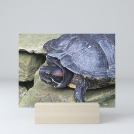 Redeared Slider Mini Art Print