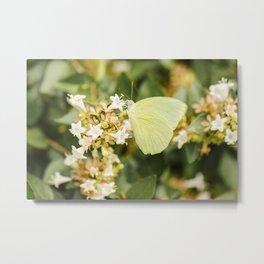 Lemon Migrant Butterfly Metal Print
