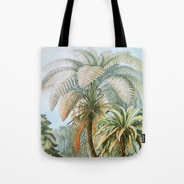 Vintage Fern and Palm Tree Art - Haeckel, 1904 Tote Bag