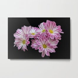 isolated daisy on black background Metal Print