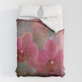 Paleonopsis Comforters
