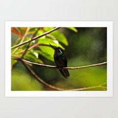 Hummingbird on a branch Art Print