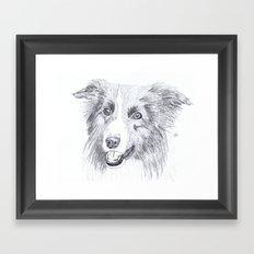 Border Collie Sketch Framed Art Print
