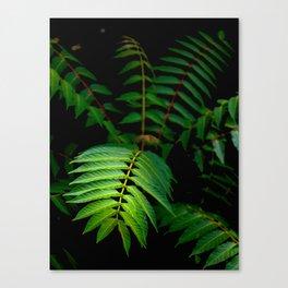Illuminated Fern Leaf In A Dark Forest Background Canvas Print