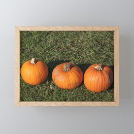 Pumpkins on a farm in the fall during harvest time Framed Mini Art Print