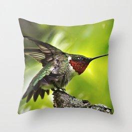Hummingbird Dominance Throw Pillow