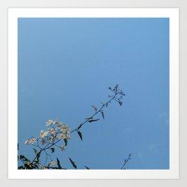 flower and light  - Cherry tree 2 Art Print