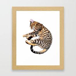 Bengal Kitty Nap Framed Art Print