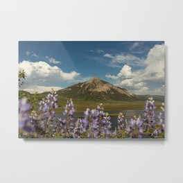 Mount Crested Butte through the Lupines  Metal Print