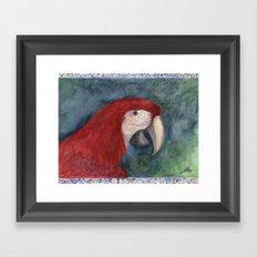 Red Macaw Framed Art Print