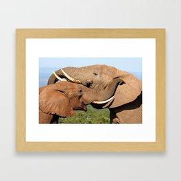 Elephant love, Africa wildlife Framed Art Print