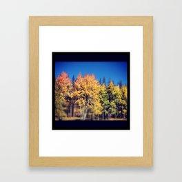 Aspen Leaves in Colorado Framed Art Print
