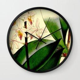 Phalaenopsis equestris (as Phalaenopsis rosea) Curtis' 86 (Ser. 3 no. 16) pl. 5212 (1860) Wall Clock