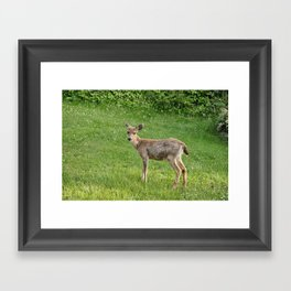 Young buck on the lawn 10 Framed Art Print