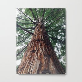 Gracing the magical forest Metal Print