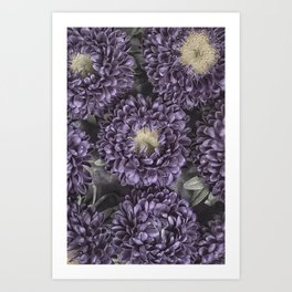 Metallic Purple Mums on a Metal Background Art Print