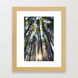 The tall forests of Washougal at sunset Framed Art Print