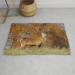 Red Deer Stag Rug