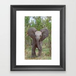 Small Elephant - Africa wildlife Framed Art Print