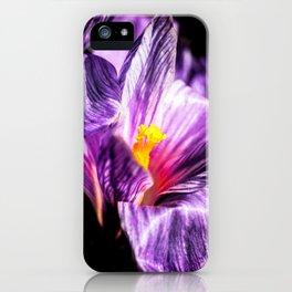 Charming Crocus Flower, Yellow Stigmas iPhone Case