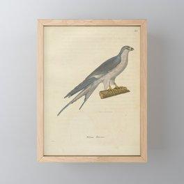falco riocour3 Framed Mini Art Print