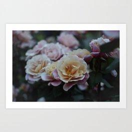 Dusk Rose Art Print