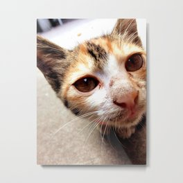 Kitty Metal Print